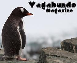 I'm an Editing Intern at Vagabundo Travel Magazine!