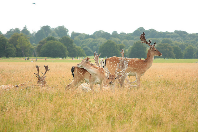 The Royal Parks of London