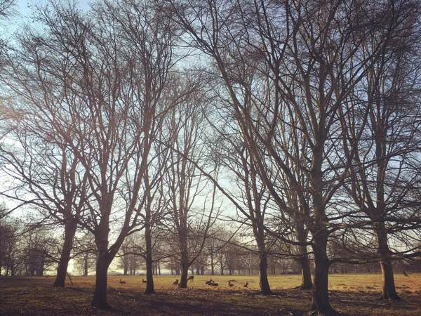 Richmond Park: Europe's Biggest Urban Park